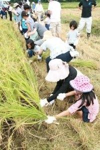 H30 稲刈り体験交流会2