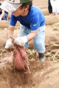 稲刈り体験交流会4