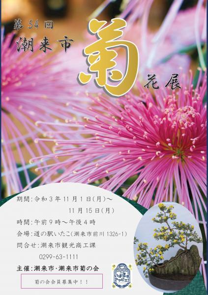 菊花展示会