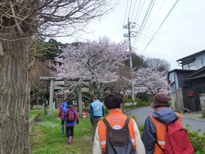 26桜まつりウォーキング1