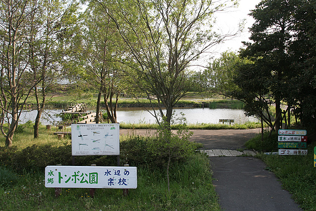 水郷トンボ公園1大