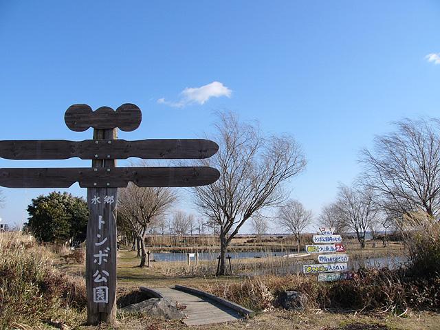 水郷トンボ公園2大