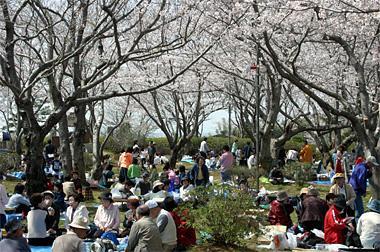 権現山公園での花見の様子