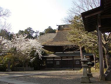 春の長勝寺
