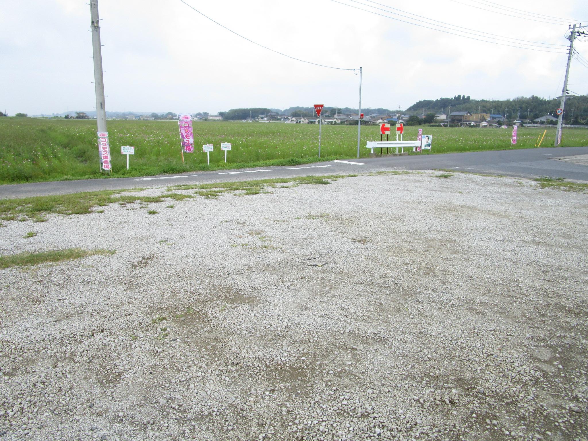 コスモス畑臨時駐車場