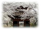 春の長勝寺の画像