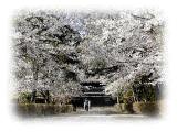 春の長勝寺の画像2